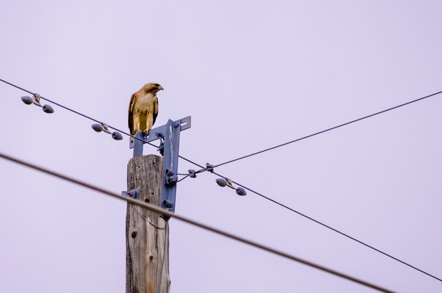 bird-perched-on-electricity-pole-2865415 (1).jpg